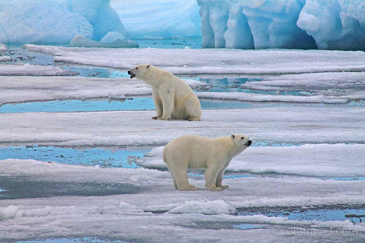 arctic expedition, arctic cruise, arctic russia, russia, expedition, cruise, arctic, russian arctic, national park, franz josef land, novaya zemlya, nova zembla, murmansk, kola travel